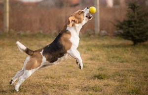 There's a Reason Your Dog Loves His Ball