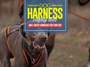 Top 3 Safest Dog Harness Choices for Car Travel
