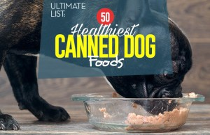 Top 50 Best Canned Dog Food