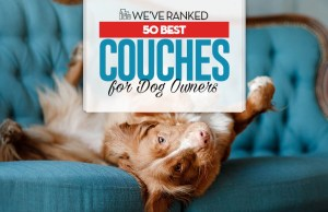 Top 50 Best Couches for Dogs