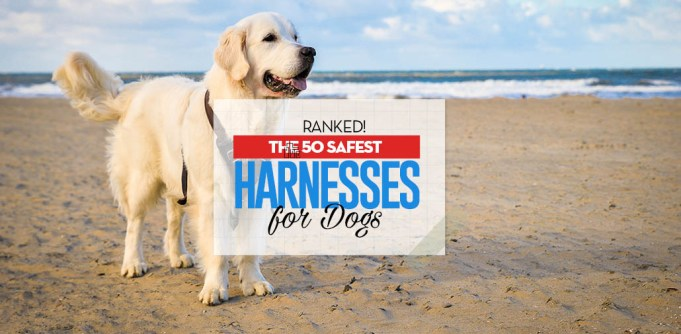 Top 50 Best Dog Harness for Walking
