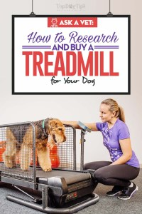 Treadmill for Dogs - The Vet's Buying Guide for Pet Owners