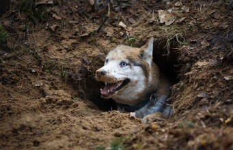 Why Do Dogs Dig and How to Stop a Dog from Digging