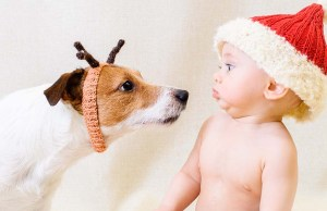 17 Rules to Keep Kids and Dogs Safe