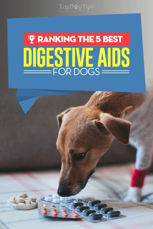 5 Top Rated Best Digestive Aids for Dogs