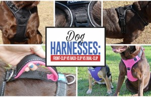 All Types of Dog Harnesses Tested and Compared