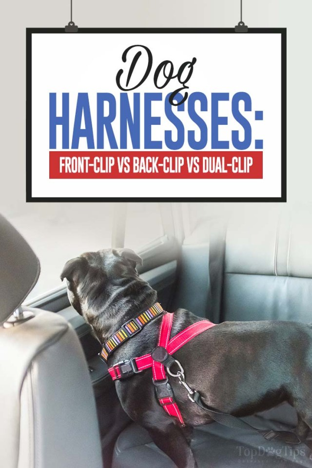 Different Dog Harness Types