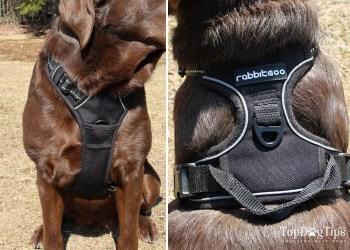 The dual-clip types of dog harnesses.