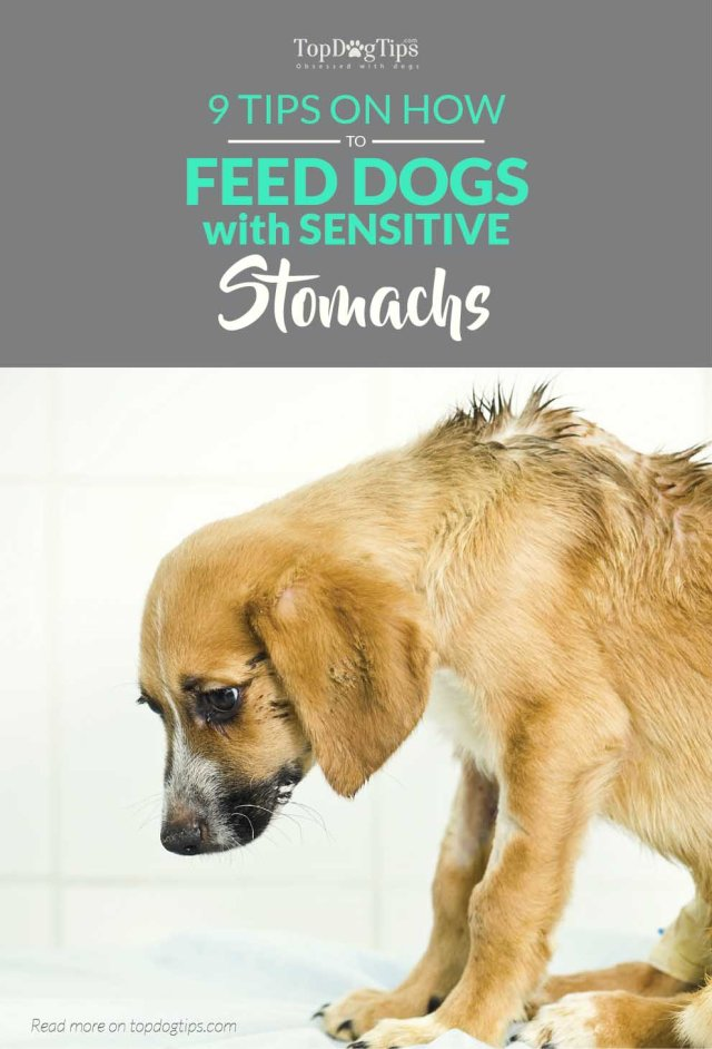 How to Feed a Dog with Sensitive Stomach