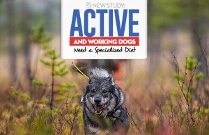 New Study Shows Your Active Dog Needs a Specialized Diet