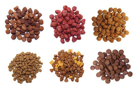 Picking Dog Food for Sensitive Stomachs