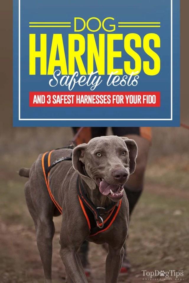 The 3 Safest Crash Tested Dog Harness for Car Travel Brands