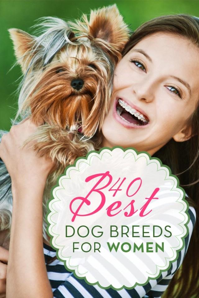 Top 40 Best Dog Breeds for Women