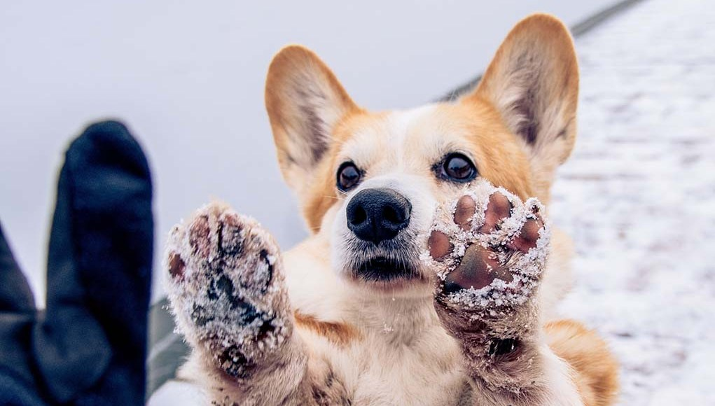 12 Great Ideas for Your Dog Bucket List
