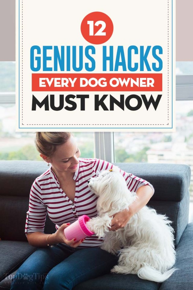 12 Money-Saving Hacks Every Dog Owner Must Know