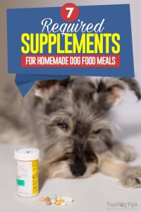 7 Essential Homemade Dog Food Supplements