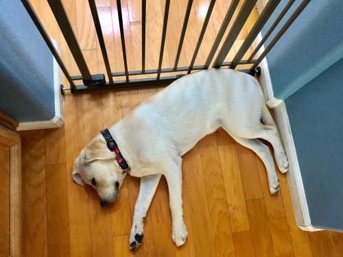 Baby Gate or Puppy Pen