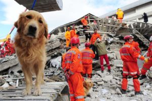 Can Dogs Predict Earthquakes? Science Says No