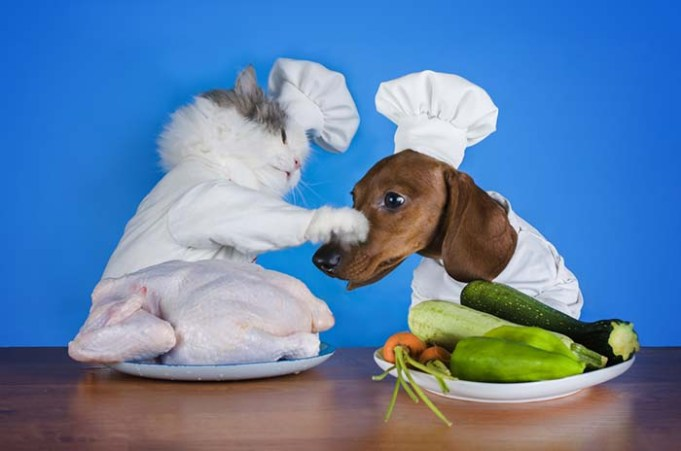 Dogs Like Fatty Food And Cats Want to Carbo-load, Study Finds