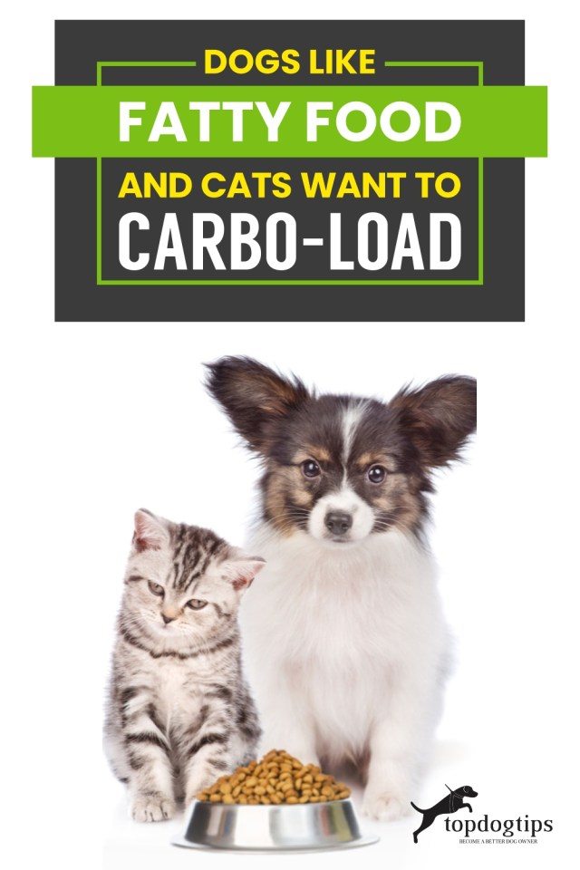 Dogs Like Fatty Food and Cats Want to Carbo-load