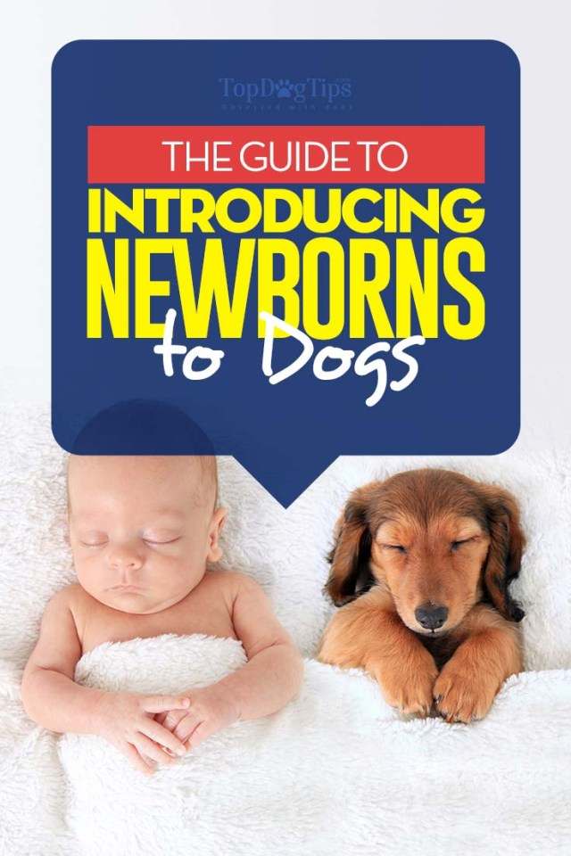 Dogs and Newborns Introductions