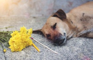 Grief Over Pet Loss - A Tragedy That Can Hurt More than Human Loss