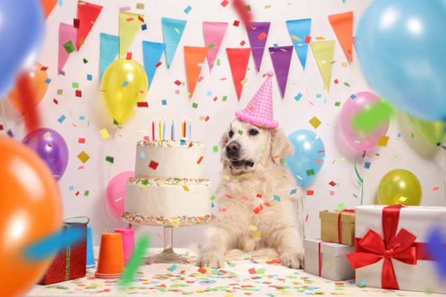 Have a Birthday Pawty