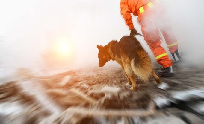 New Study Finds No Evidence That Dogs Can Predict Earthquakes