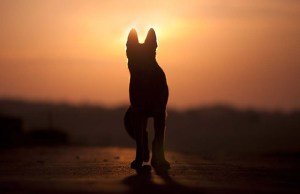 The 15 Ways to Prepare for Last Days of Your Dying Dog