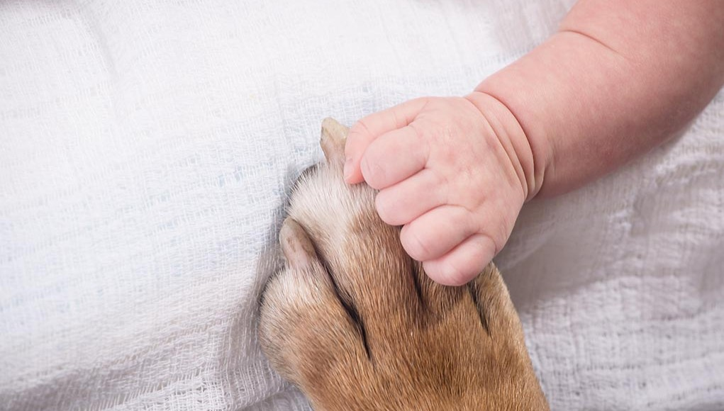The Guide to Introducing Dogs to Newborns