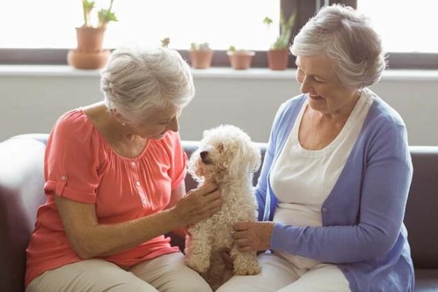 Visit Seniors at a Nursing Home