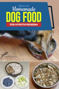Homemade Dog Food for Hypothyroidism Recipe - A Video Guide