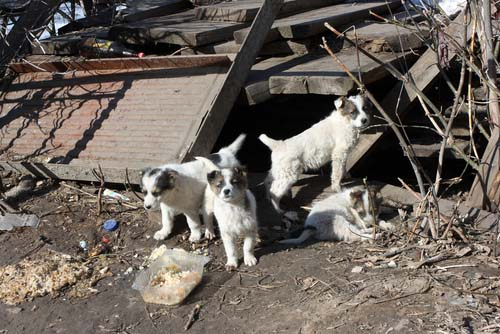 Taxpayers Pay for the Operation of City Shelters