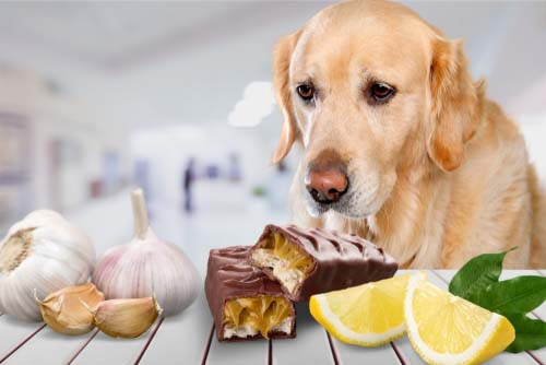 The Disadvantages of Homemade Dog Food