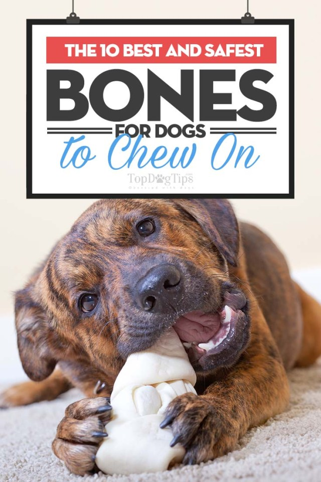 Top Rated Best Bones for Dogs to Chew