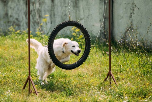 12 Unique Ways to Tire Out a Hyperactive Dog