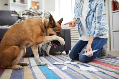 5 Reasons for Returning Dog to Shelter