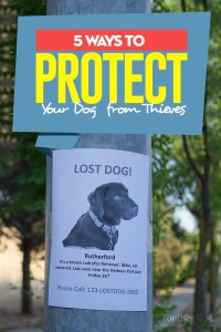 5 Ways to Protect Your Dog from Thieves