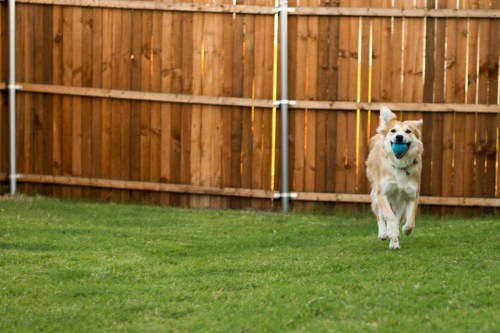 Different Variations of Fetch