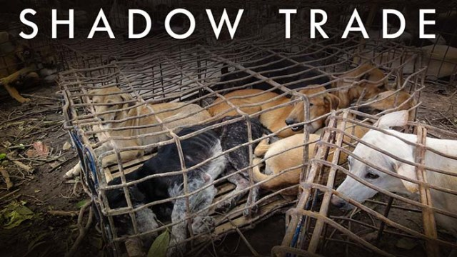Shadow Trade dog documentary