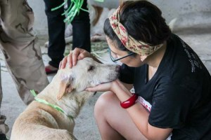 Social Media Helps Transporting Efforts of Abandoned or Lost Dogs