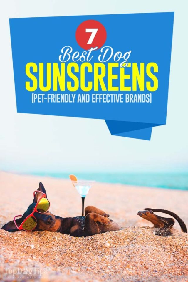 Top Rated Best Dog Sunscreen Brands That Are Safe and Effective