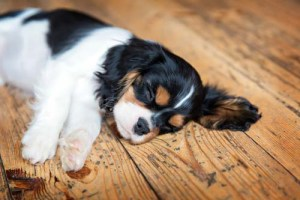 Veterinary Care for Dog Muscle Spasms