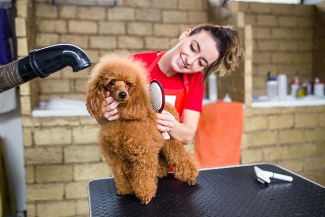 You don't mind paying for weekly grooming