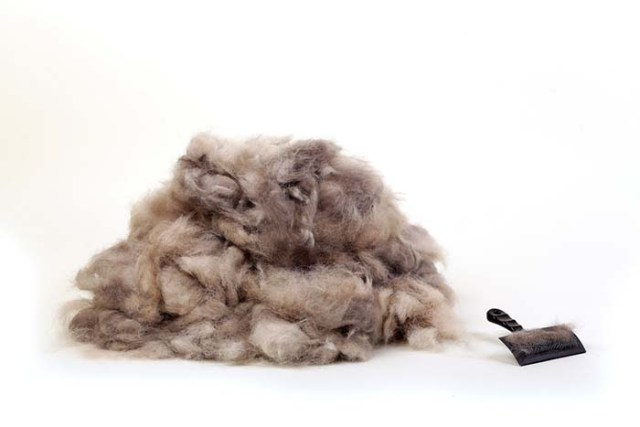 Your clothes have dog hair and that's okay