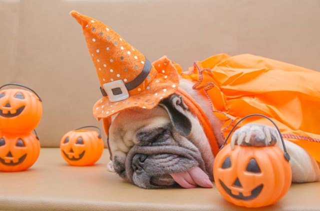 15 Dog Safety Tips for Halloween