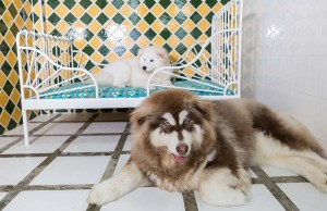 15 Things to Know About Dog Hotel Before You Leave Your Pup There