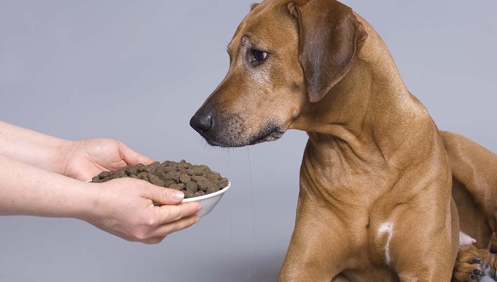 Ask a Veterinarian - What Is the Best Dog Food for Arthritis and Joint Health