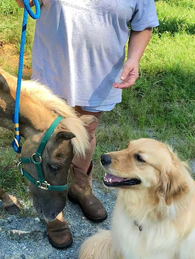 Best friends dog and the horse
