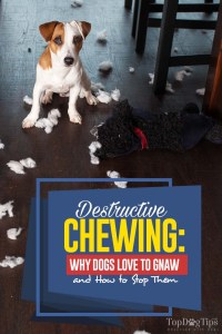 Destructive Chewing - This Is Why Dogs Love to Gnaw and How to Stop This
